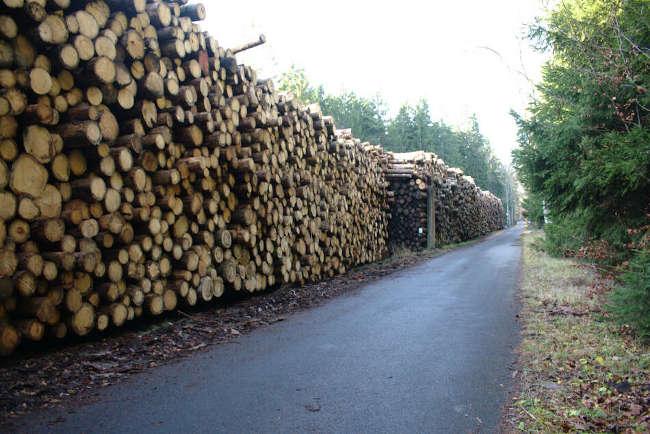 Skládka dřeva